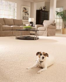 how to clean dog urine from carpet